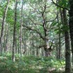 Hackathon nazionale sulle foreste